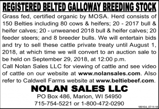 Registered Belted Galloway Breeding Stock