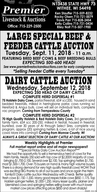 Large Special Beef & Feeder Cattle Auction