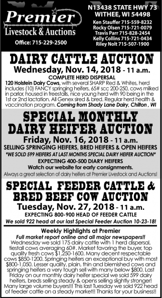 Dairy Cattle Auction