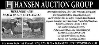 Hereford and Black Baldy Cattle Sale