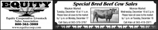 Special Bred Beef Cow Sale