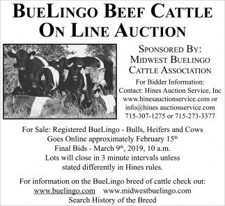 Buelingo Beef Cattle