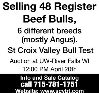 Selling 48 Register Beef Bulls