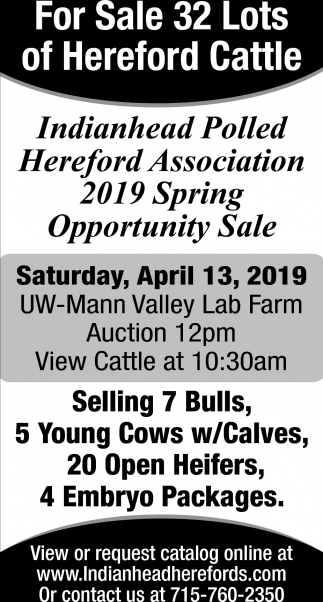 For Sale 32 Lots of Hereford Cattle