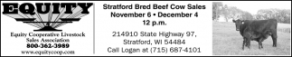 Stratford Bred Beef Cow Sales