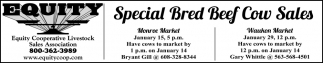 Special Bred Beef Cow Sales