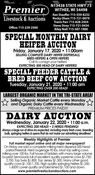 Special Feeder Cattle