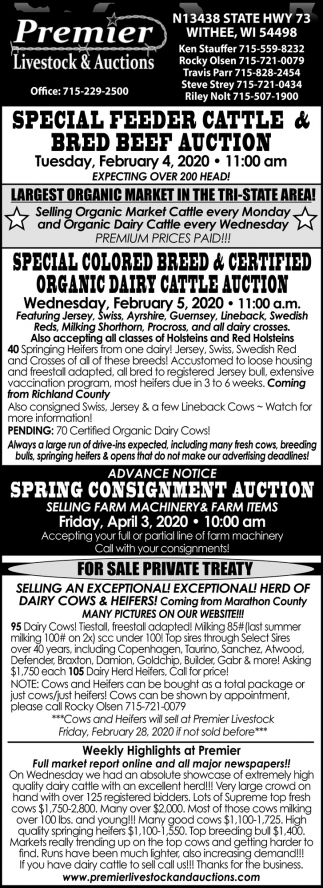 Feeder Cattle Auction