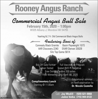 Commercial Angus Bull Sale