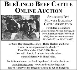 Buelingo Beef Cattle