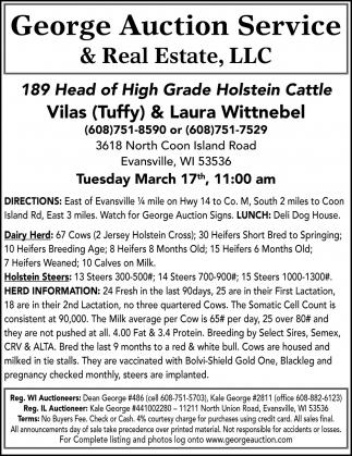 189 Head of High Grade Holstein Cattle